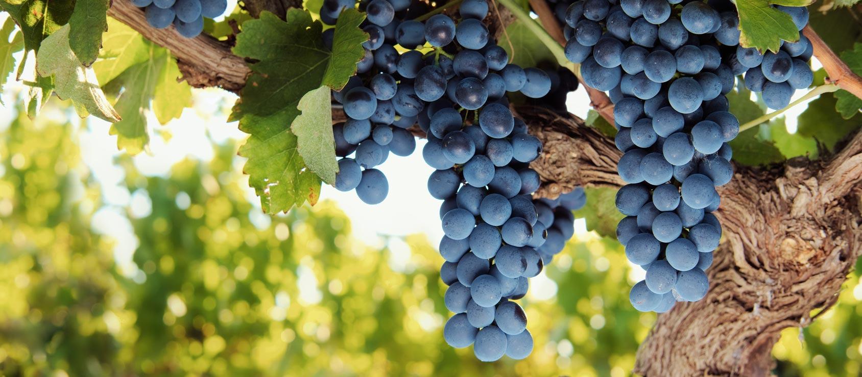slide uva bonanno