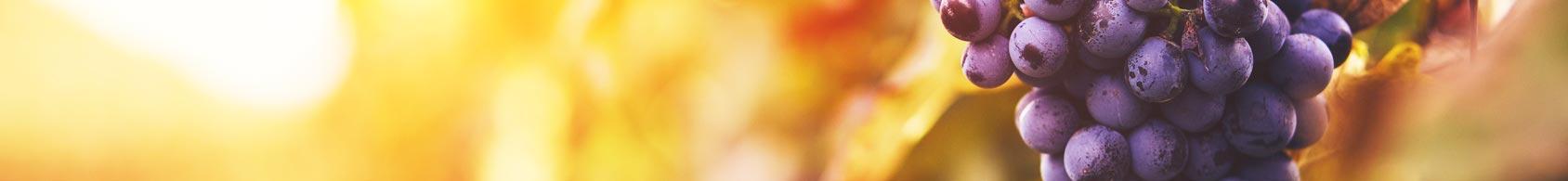 uva bonanno