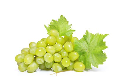 uva bianca white grapes